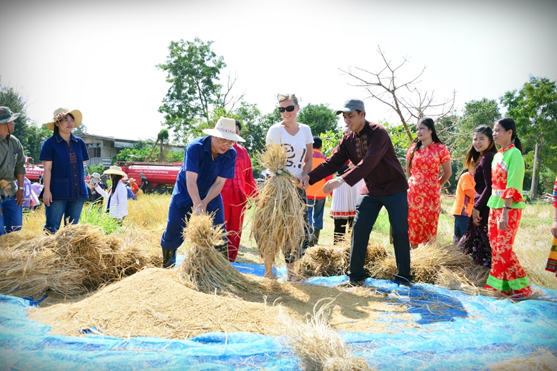 Golden Rice for MSU International Rice Harvesting